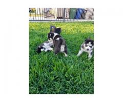 Camada disponible de Husky